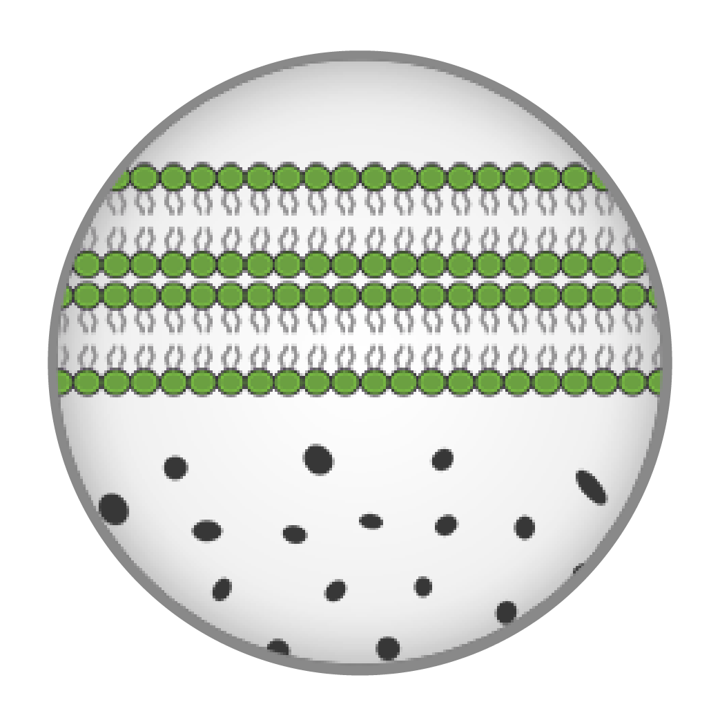 CBD Liposome Encapsulation cbDNA 05