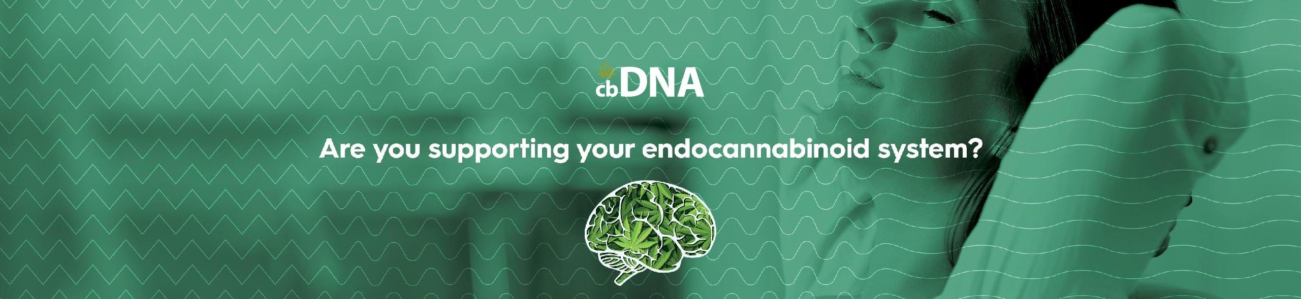 cbDNA CBD Endocannabinoid System 01