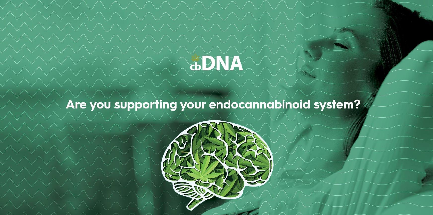 cbDNA CBD Endocannabinoid System 02