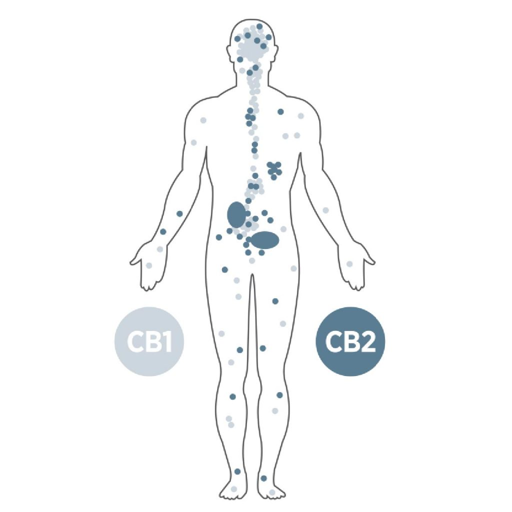 Taking CBD with medications